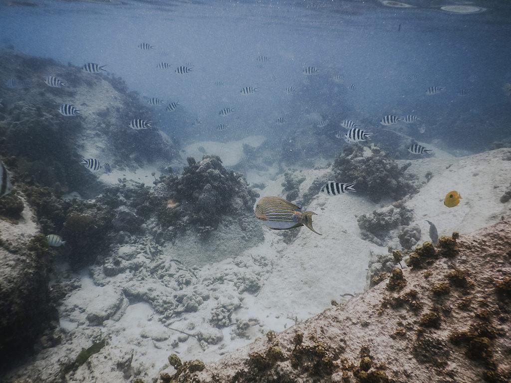 rajskie-wyspy-seszele-seychelles-praslin-ladigue-curiese-dive