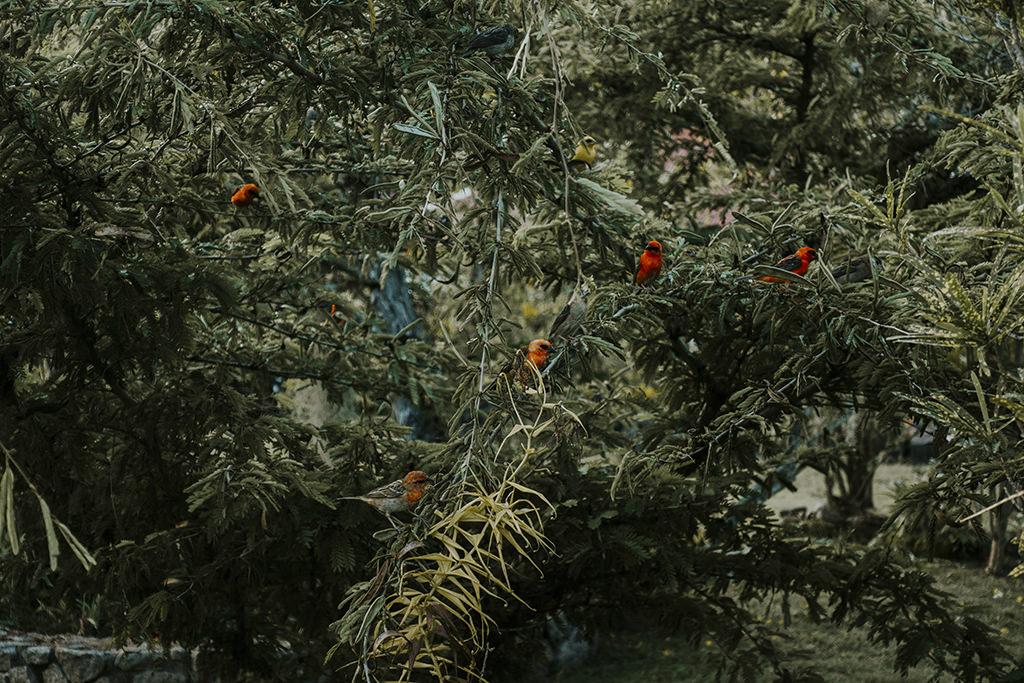 seychelles-seszele-wycieczka-na-seszele-tanie-loty-rajskie-wyspy-ptaki