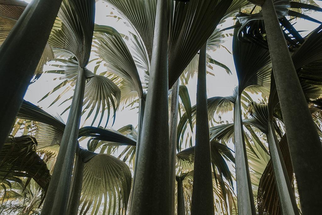 rajskie-wyspy-seszele-seychelles-praslin-ladigue-curiese